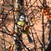 Stunde der Wintervögel – zählen und mitmachen